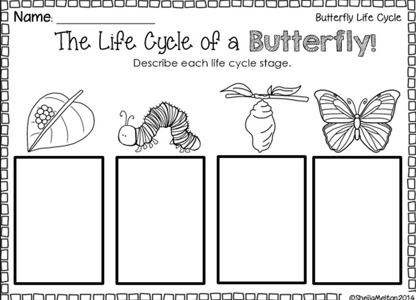 Butterfly life cycle worksheets for preschoolers